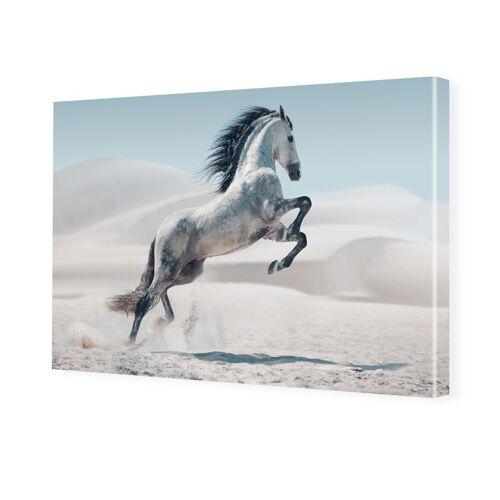 myposter Pferd Bild Foto auf Leinwand im Format 80 x 60 cm