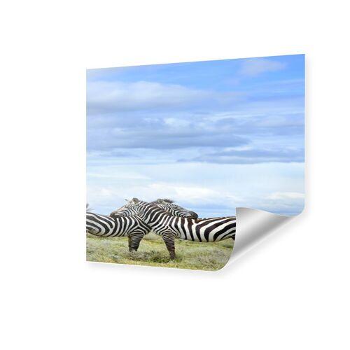 myposter Zebras Poster Poster quadratisch im Format 80 x 80 cm
