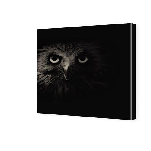myposter Uhu Portrait Fotos auf Leinwand quadratisch im Format 70 x 70 cm