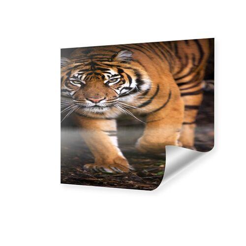 myposter Tiger Poster Poster quadratisch im Format 20 x 20 cm
