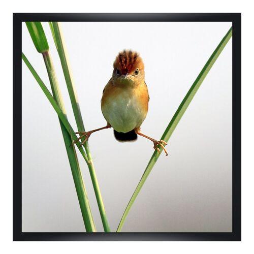 myposter Lustige Vogelbilder Poster im Bilderrahmen Holz in schwarz im Format 15 x 10 cm