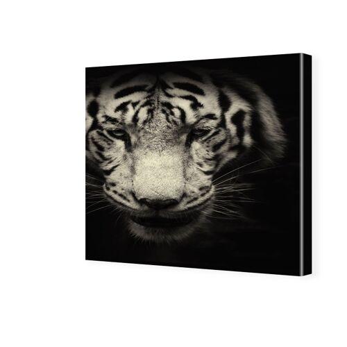 myposter Tiger Portrait Fotos auf Leinwand quadratisch im Format 70 x 70 cm