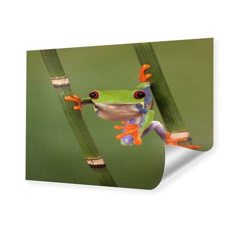 myposter Froschbild Foto auf Hahnemühle Papier im Format 30 x 20 cm