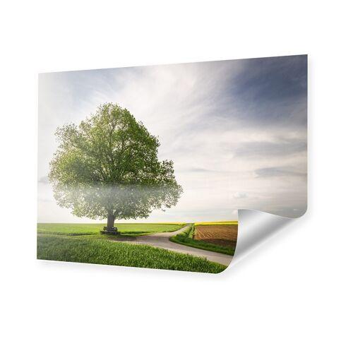 myposter Linde im Fruehling Foto im Format 50 x 40 cm