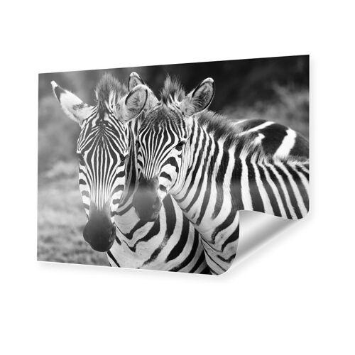 myposter Zebras Motiv Poster im Format 24 x 18 cm