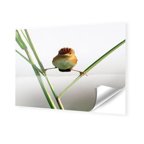 myposter Lustige Vogelbilder Fotos auf Folie im Format 90 x 60 cm