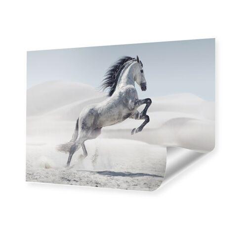 myposter Pferd Bild Poster im Format 80 x 45 cm