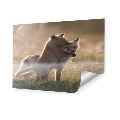 myposter Bild Füchse Poster im Format 30 x 20 cm