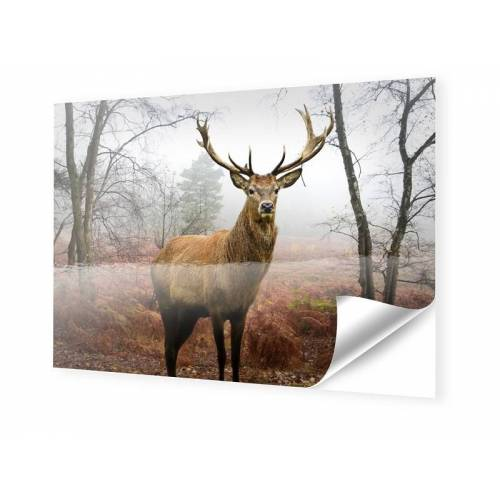 myposter Hirschbilder Foto auf Klebefolie im Format 70 x 50 cm