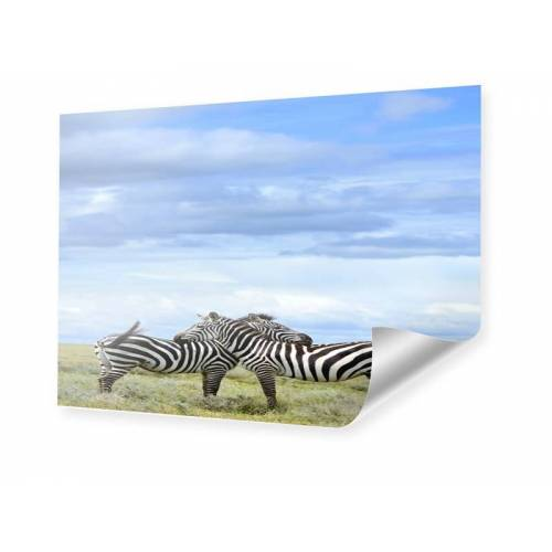 myposter Zebras Poster Poster im Format 18 x 13 cm