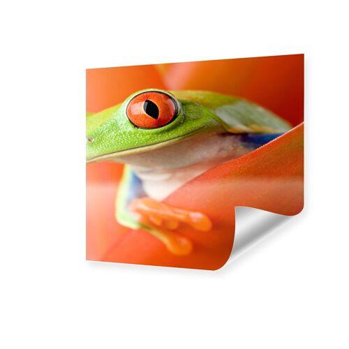 myposter Frosch Poster Poster quadratisch im Format 50 x 50 cm