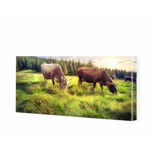 myposter Kühe Bild Panorama Leinwand als Panorama im Format 150 x 60 cm