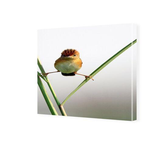 myposter Lustige Vogelbilder Bild auf Leinwand quadratisch im Format 140 x 140 cm