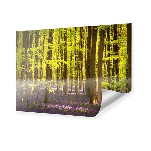 myposter Hasenglöckchen im Wald Poster im Format 90 x 60 cm