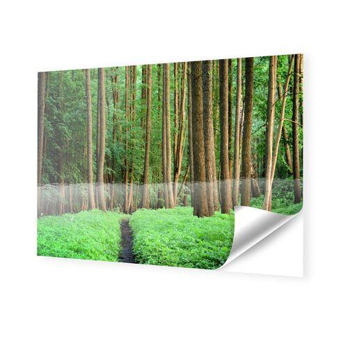 myposter Wald Poster Foto auf Klebefolie im Format 100 x 70 cm