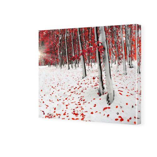 myposter Birkenwald Bilder Fotos auf Leinwand quadratisch im Format 20 x 20 cm