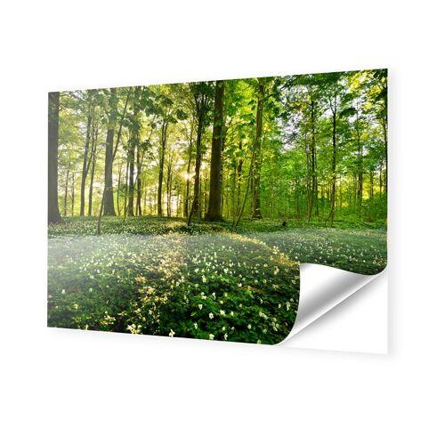 myposter Waldbilder Klebefolie im Format 224 x 126 cm