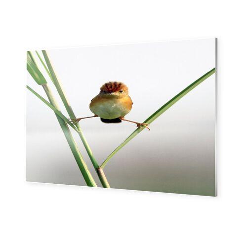 myposter Lustige Vogelbilder Bilder auf Forex im Format 70 x 50 cm