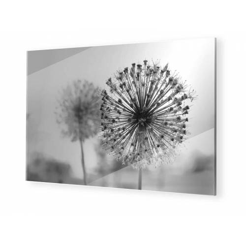 myposter Pusteblume Glasbilder im Format 60 x 40 cm