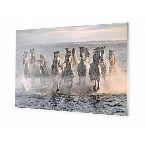 myposter Pferde Foto Forex im Format 80 x 60 cm