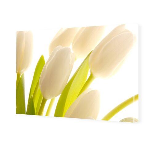 myposter Tulpenbilder Bilder auf Leinwand im Format 120 x 80 cm
