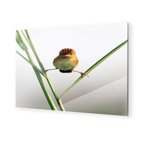 myposter Lustige Vogelbilder Glasbilder im Format 90 x 60 cm
