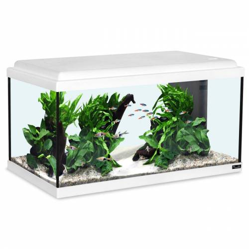 Aquatlantis Advance 60 LED Aquarium, 60x30x34cm, 54L, weiß