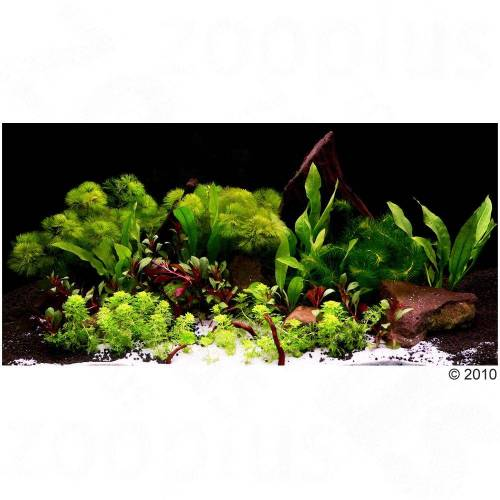 Asia World Aquarienpflanzen 14 Pflanzen