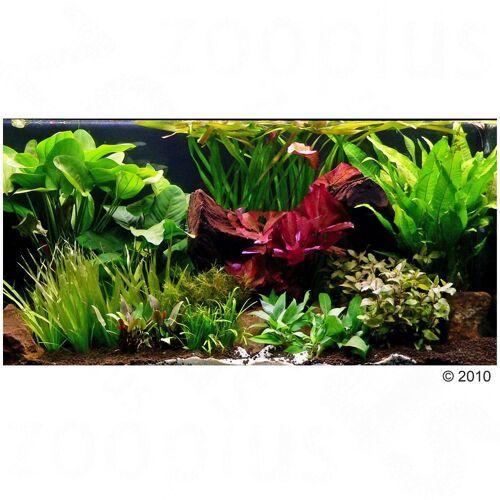 Aquarienpflanzen XXL, 33 Pflanzen inkl. 3 XLMutterpflanzen