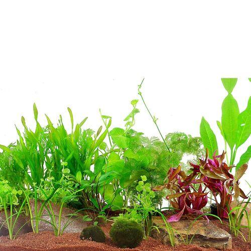 Gesellschaftsaquarium Pflanzen 17 Pflanzen