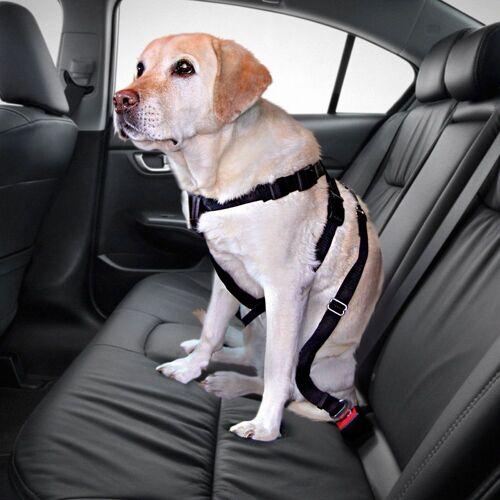 Trixie Autogurt für Hunde