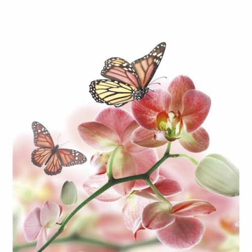 Fototapete ORCHIDS AND BUTTERFLY   MS-3-0146   Rosa  ...