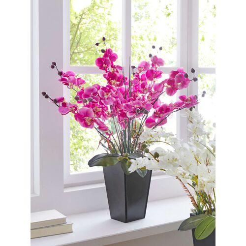 IGEA Orchidee Im Topf IGEA Fuchsia