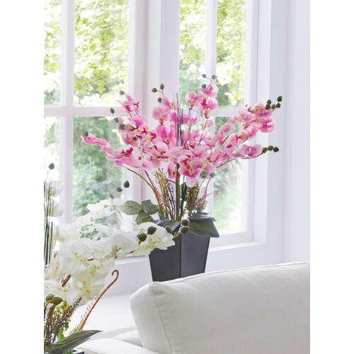 IGEA Orchidee im Topf IGEA Rosé