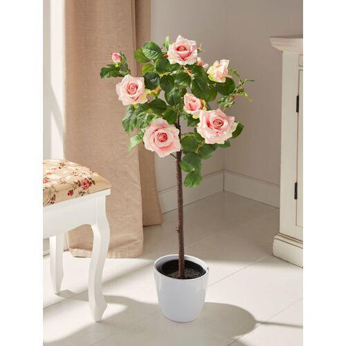 Gasper Rosenstamm im Topf Gasper Rosa