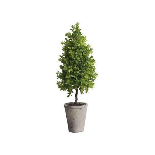 CA Buchsbaum Kegel klein in Topf 2er Set von Chic Antique