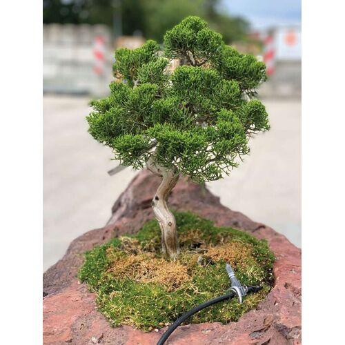 GK Bonsai-Minigarten Kategorie 3 Granitpalisade von Naturstein Geukes
