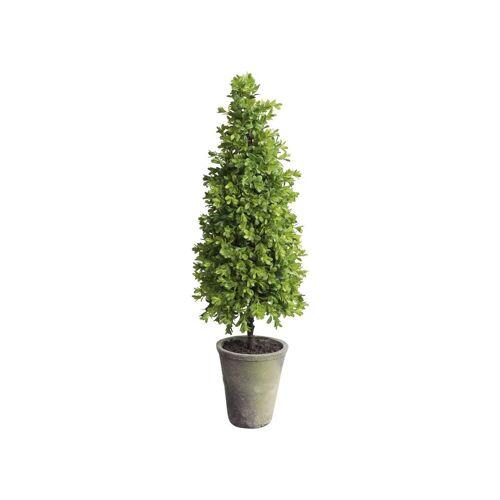 CA Buchsbaum Kegel groß in Topf 2er Set von Chic Antique