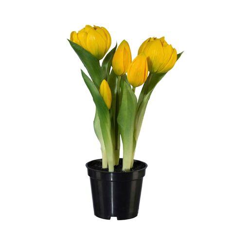 Globen Lighting 2er Set Tulpen Globen Lighting Gelb
