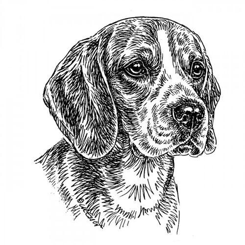 Aufkleber 15 cm Beagle