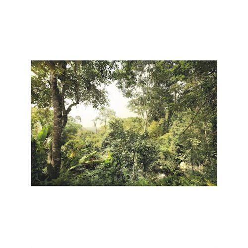 Komar Fototapete 'Dschungel' Komar Grün
