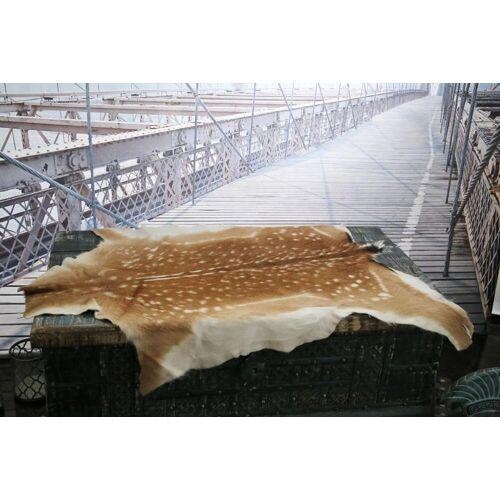 Hollert German Leather Fashion DAMWILDFELL 110-120