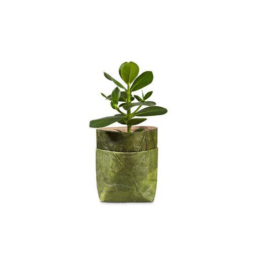 """BELEAF """"Pod Leaf"""" Aus Blattleder Vegan leaf green"""