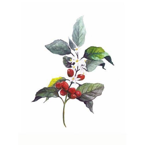 Photocircle Mantika Kaffee Pflanze - Poster Von Christina Wolff kaffee 160 x 120 cm