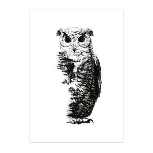 GreenBomb Poster Animal Owl Matt  A4