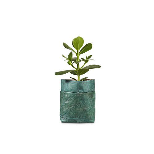 "BELEAF Pod Leaf"" Aus Blattleder Vegan spruce blue"