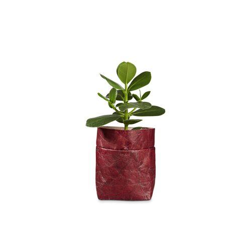 "BELEAF Pod Leaf"" Aus Blattleder Vegan poppy red"