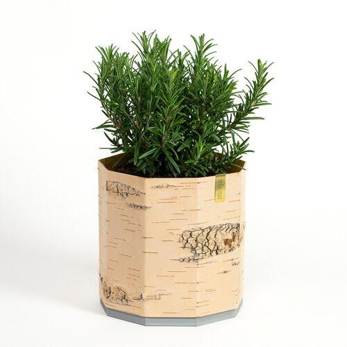 MOYA Birch Bark Übertopf / Pflanztopf / Blumentopf Aus Birkenrinde Für Kräuter Und Zimmerpflanzen  groß