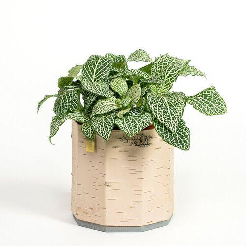 MOYA Birch Bark Übertopf / Pflanztopf / Blumentopf Aus Birkenrinde Für Kräuter Und Zimmerpflanzen  klein