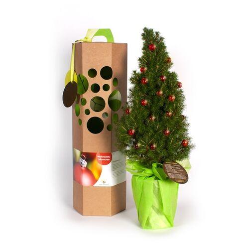 SchenkeinBäumchen Weihnachtsbäumchen Als Geschenk